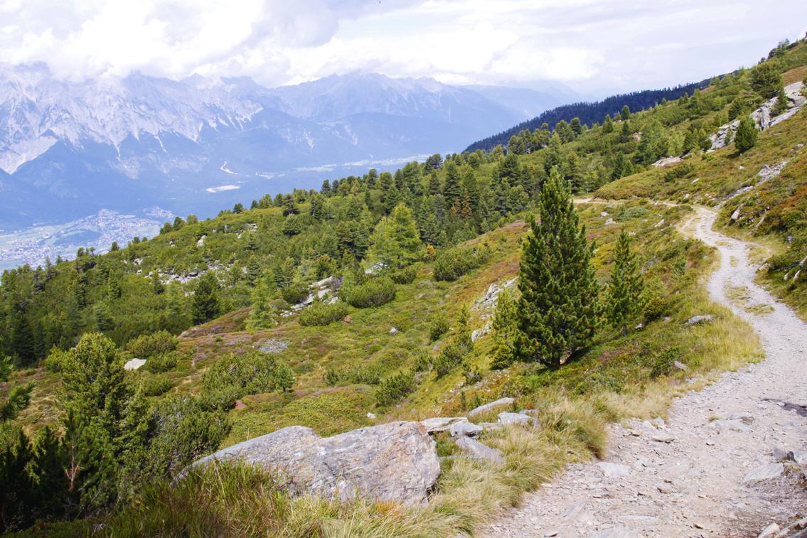 Naturerlebnis Zirbenweg - zwischen Patscherkofel und Glungezer