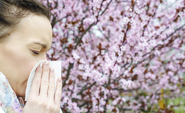 Allergic reactions to spring flowers, pollen, ragweed