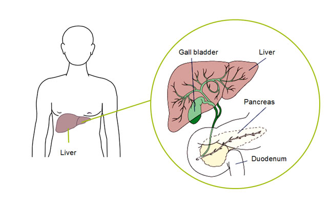 park igls mayr clinic innsbruck tyrol austria Cleansing the liver to detoxify the body